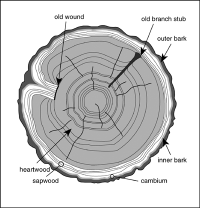 DATA | wiki | wood.png